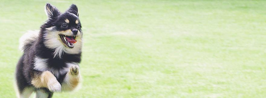 ペット・霊園・墓地・墓石、東京・千葉・埼玉の公園墓地【株式会社笹川】